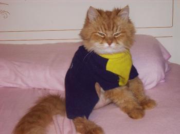 Os presento mi Gato :D